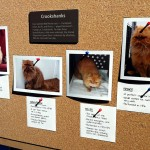Look at all the different cats who played Crookshanks!